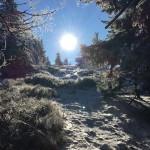 Winter_Osser
